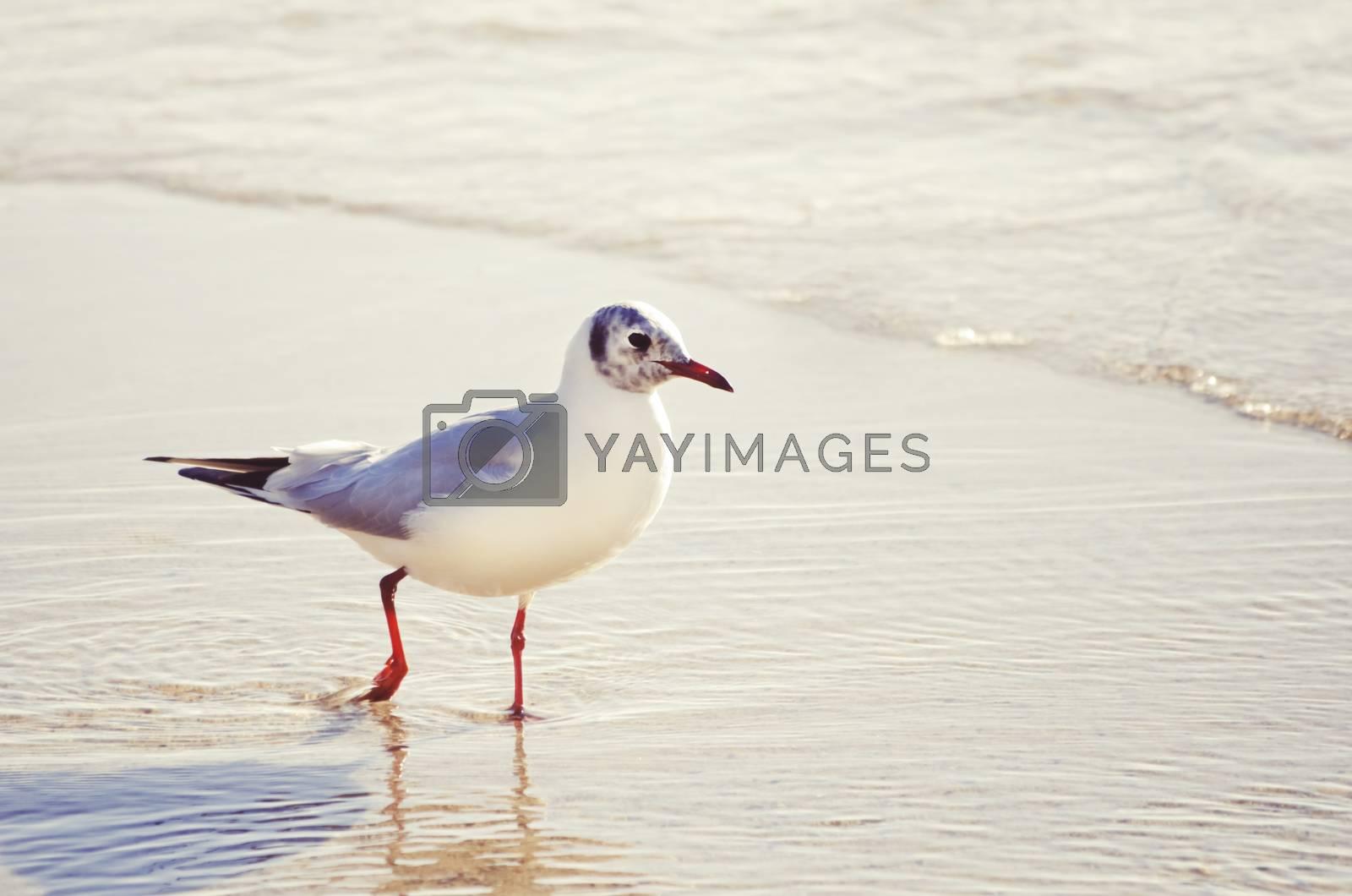 Seagull by razvodovska