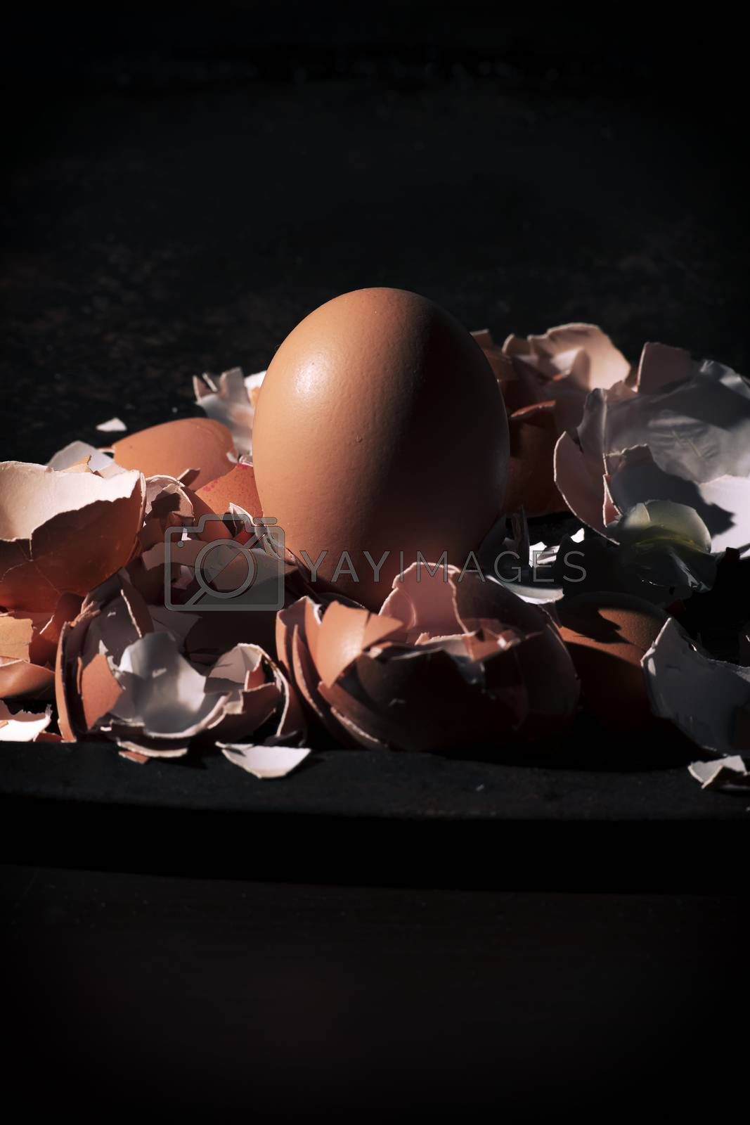 Low light with high contrast lighting of a bunch of eggs whole and crushed shells.