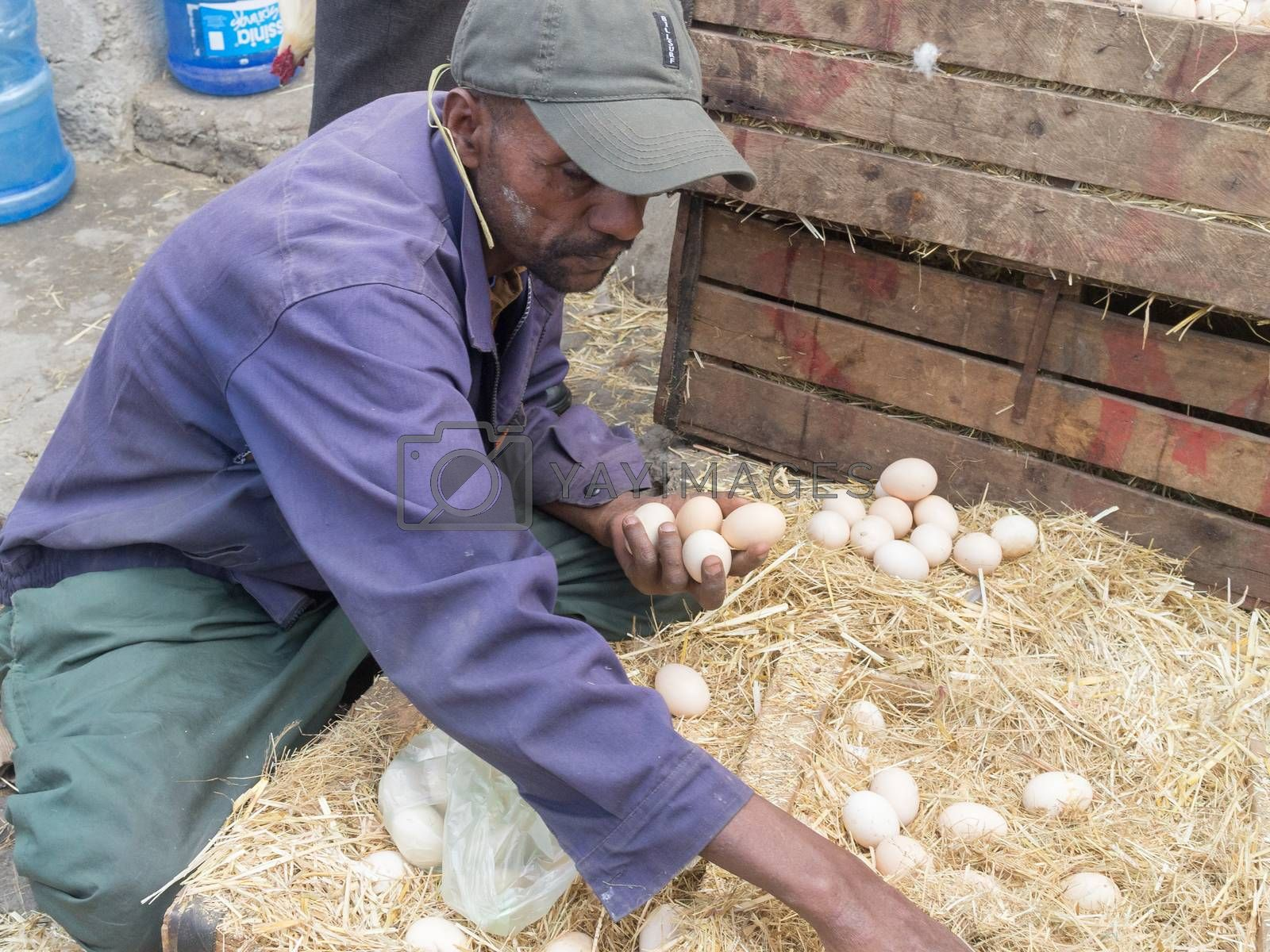 Addis Ababa: April 11: A man carefully inspects fresh farm eggs available for sale at a local market during Easter eve on April 11, 2015 in Addis Ababa, Ethiopia