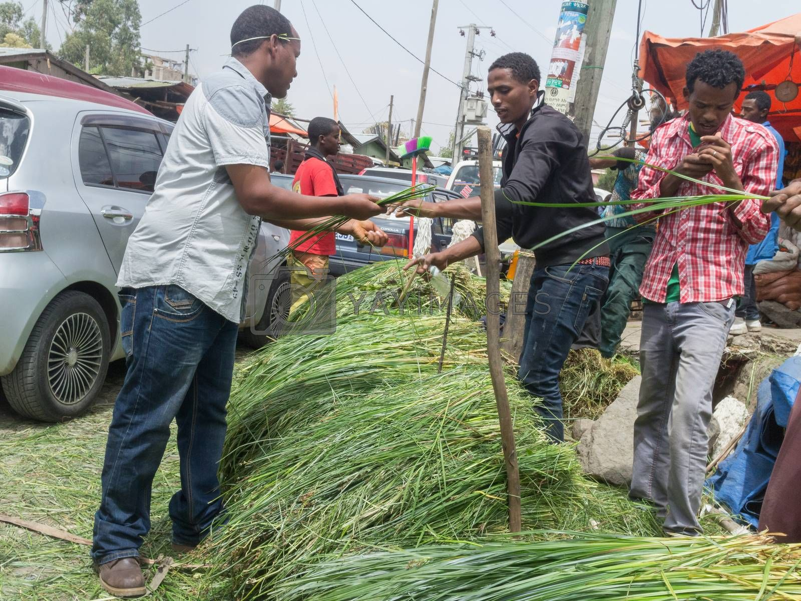Addis Ababa: April 11: Freshly cut grass which used for decorating floors during the holidays available for sale at a local market during Easter eve on April 11, 2015 in Addis Ababa, Ethiopia