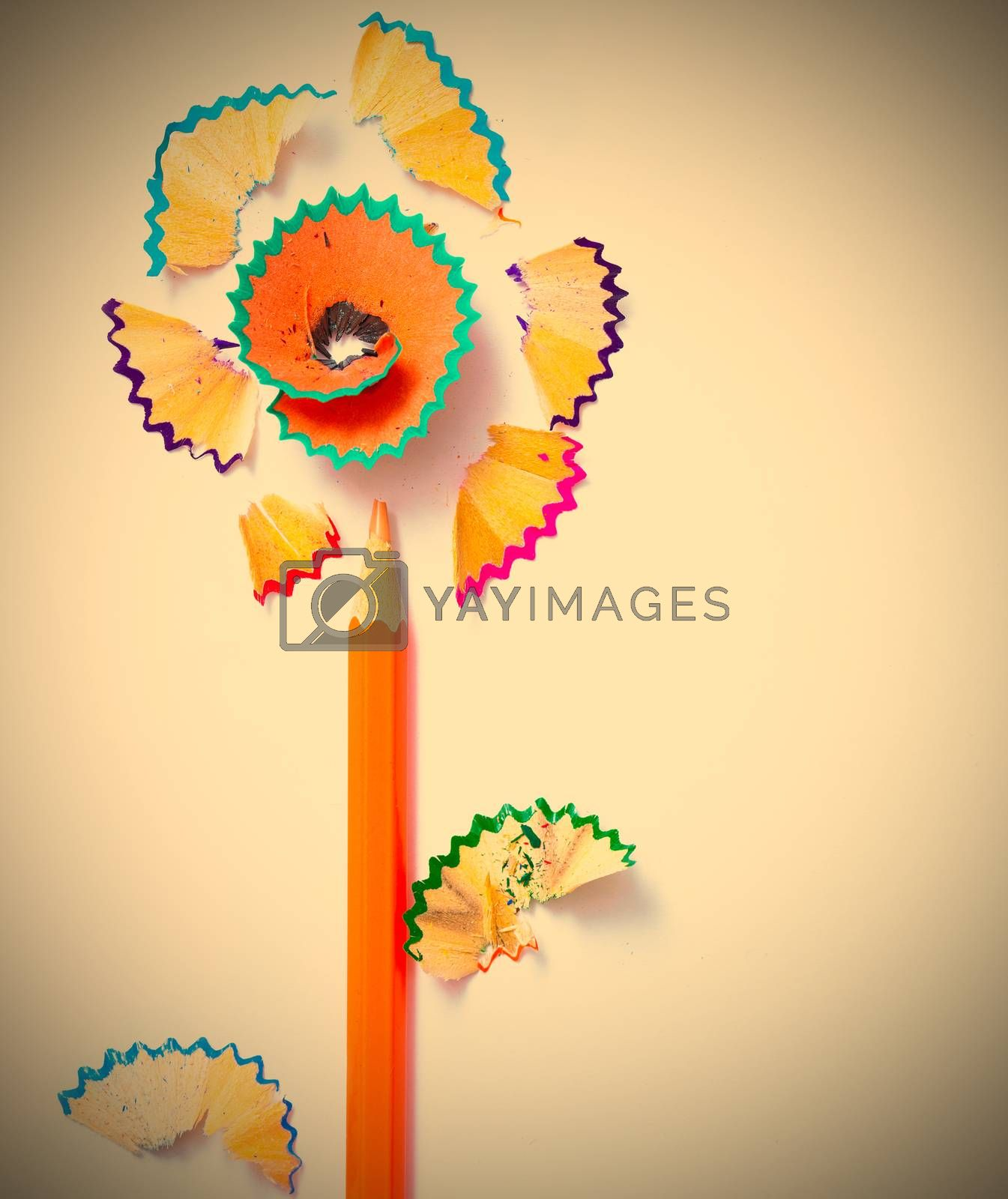 colored flower pencil on white background. instagram image retro style