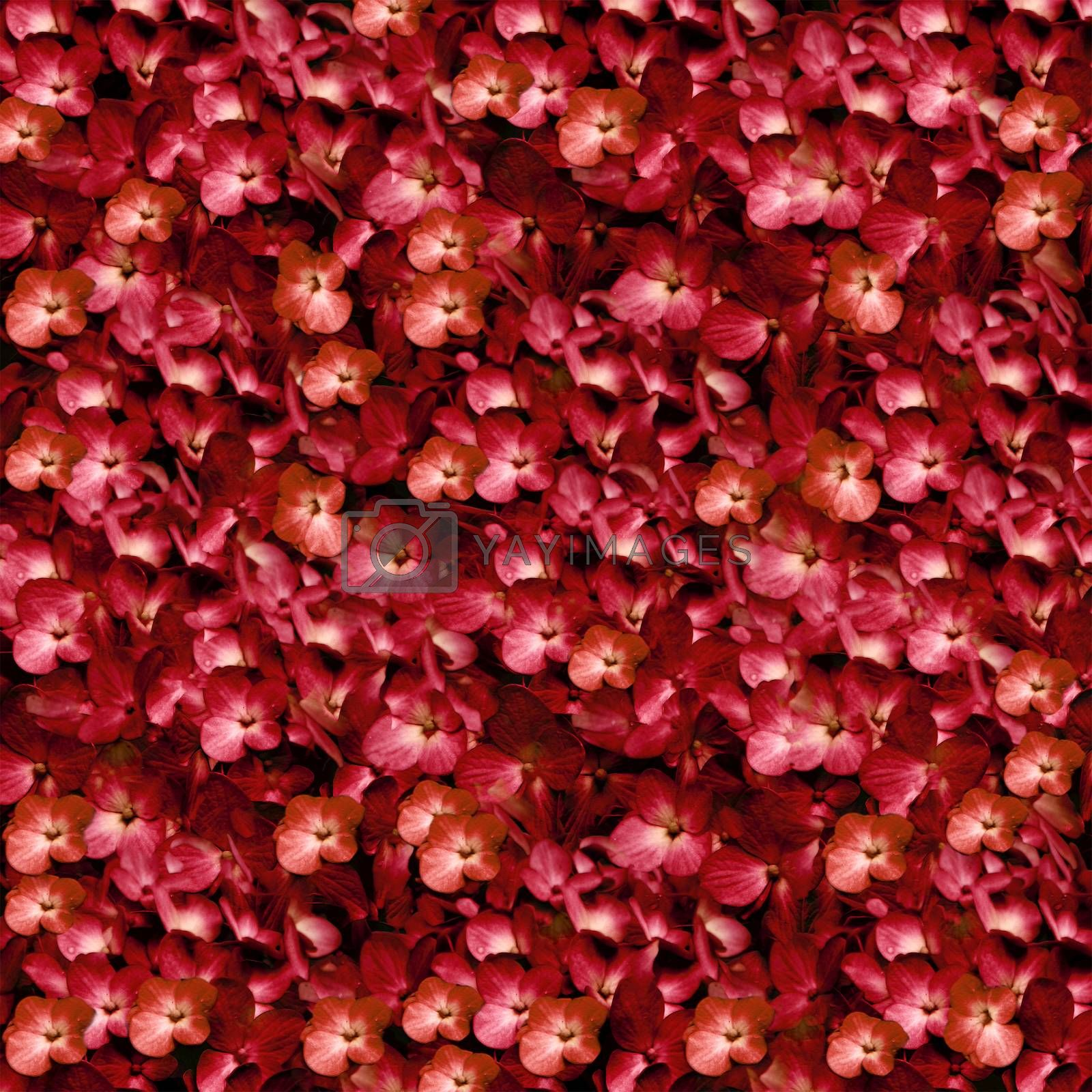 Elegant and fancy digital manipulation technique photo flowers motif pattern collage in saturated red and orange colors