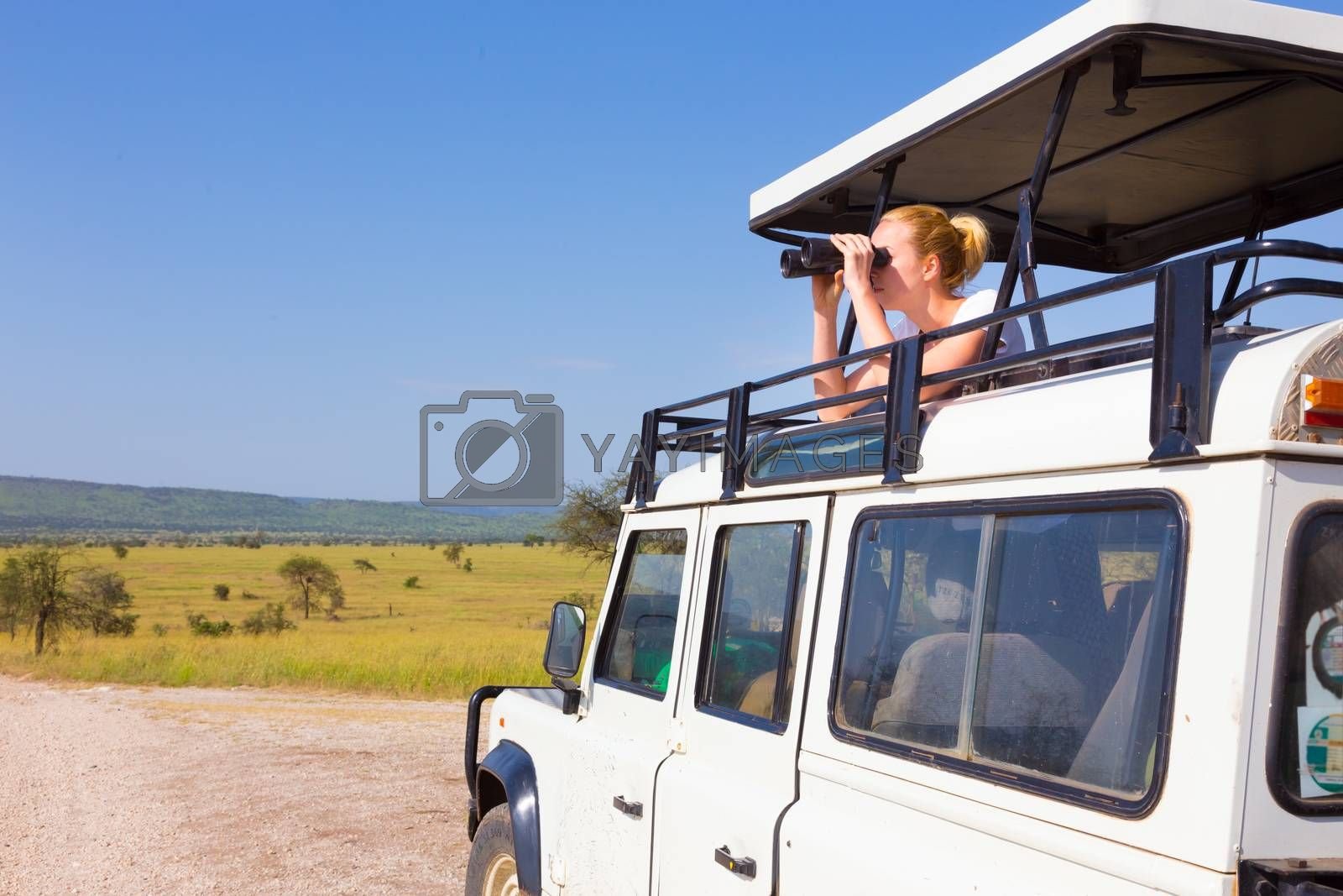 Young blond lady on safari standing in open roof jeep observing wild animals through binoculars.