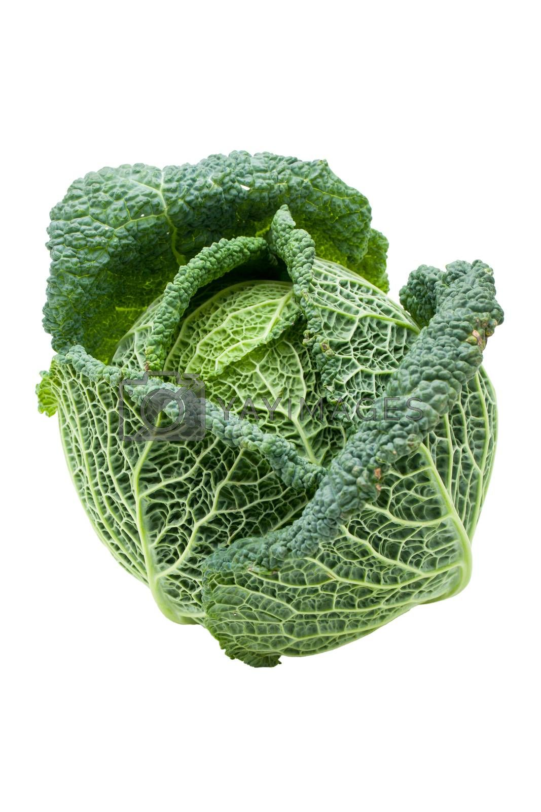 Head of fresh ripe Savoy cabbage isolated