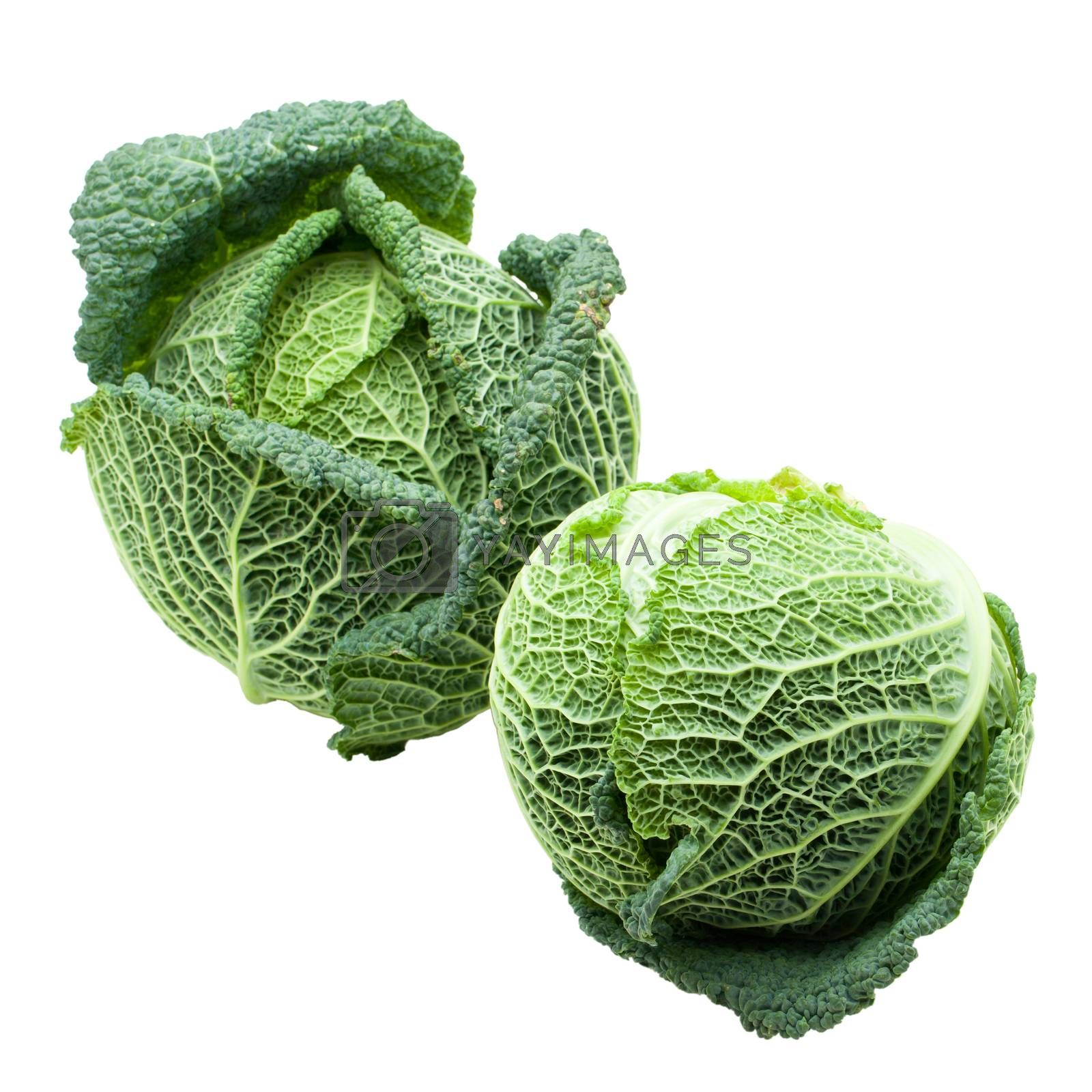 Two heads of fresh ripe Savoy cabbage isolated