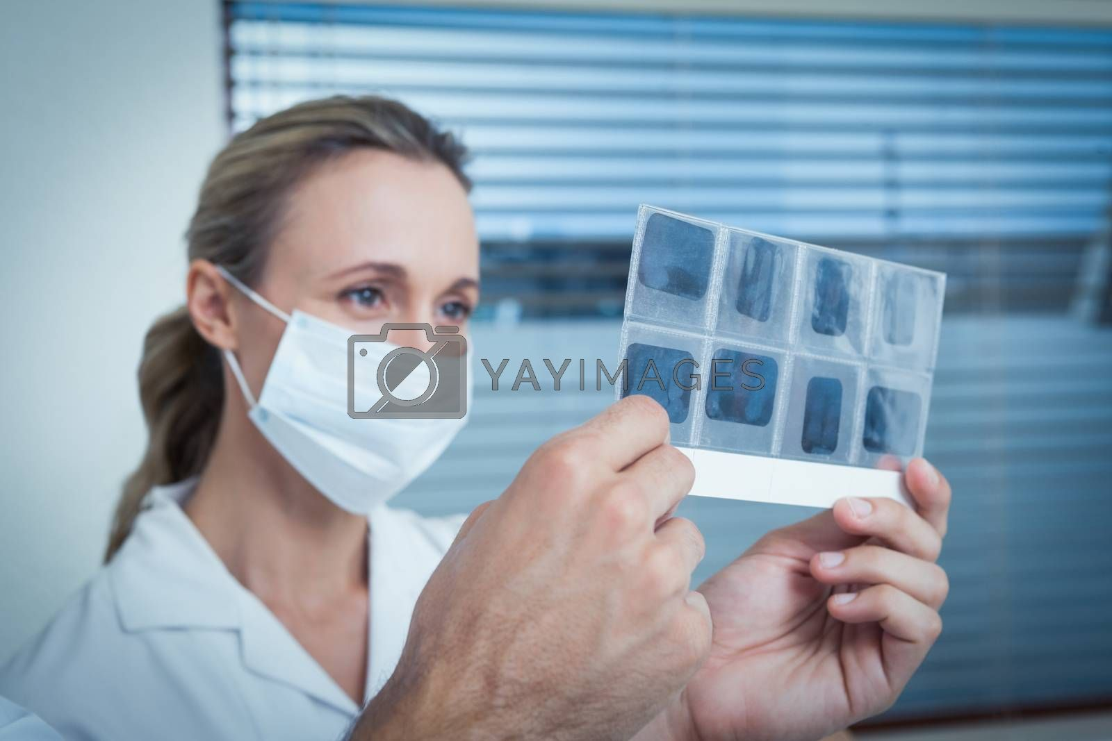 Concentrated female dentist looking at x-ray