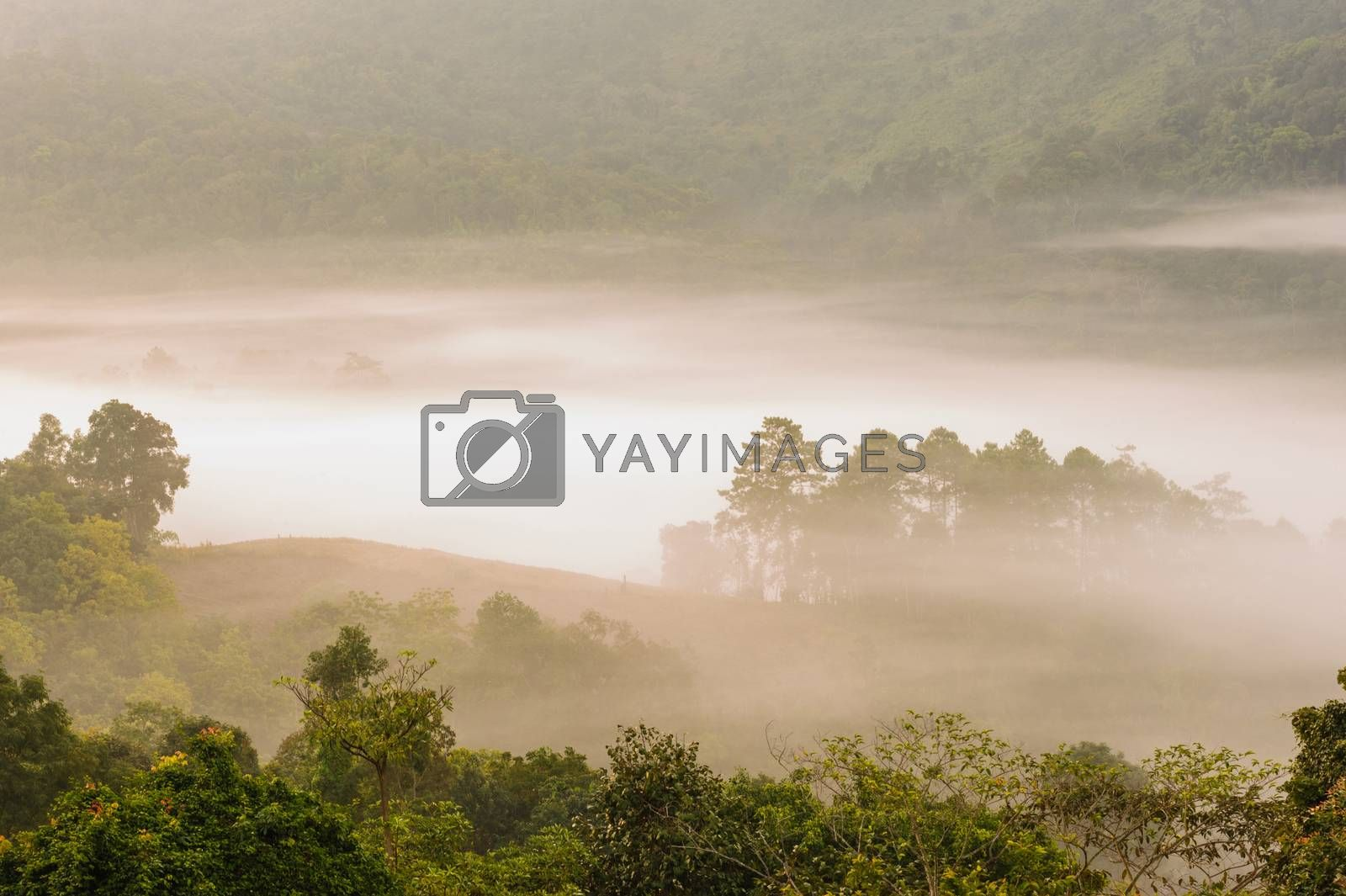 Beautiful misty sunrise on tropical forest mist, north Thailand.