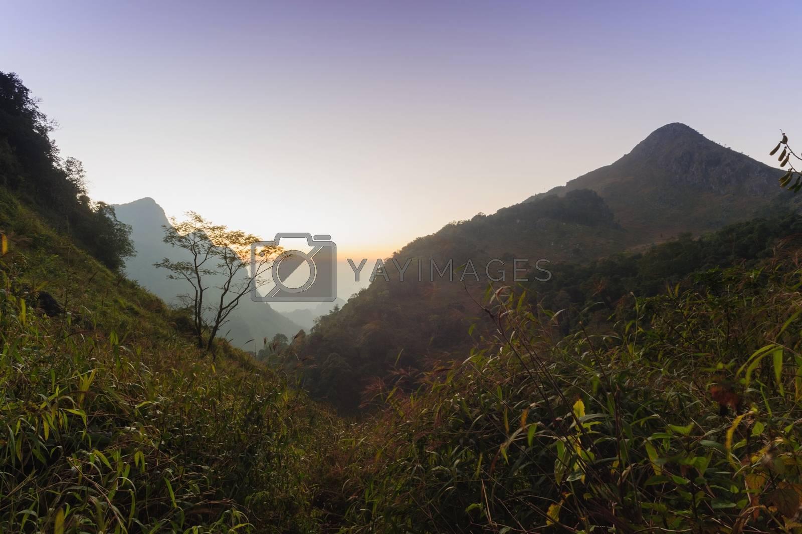 Beautiful twilight at sunset  in rainforest, Thailand.