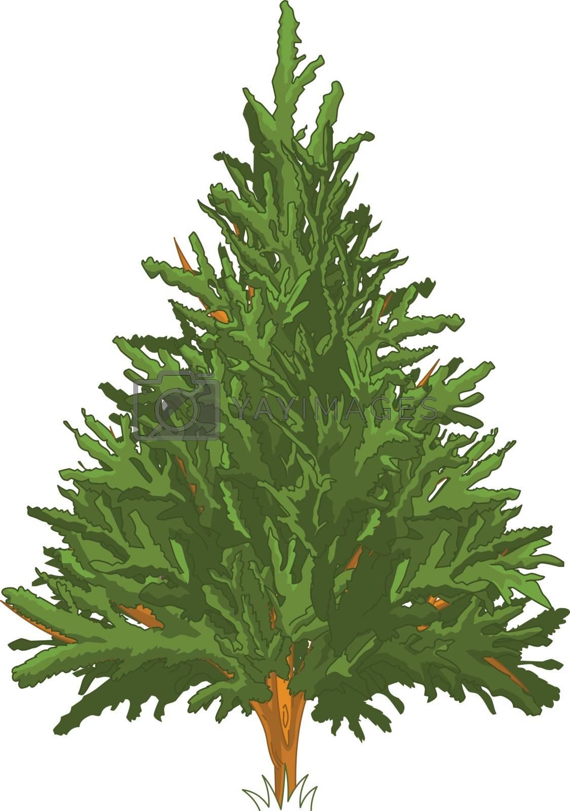 Royalty free image of Pine Tree by Dazdraperma