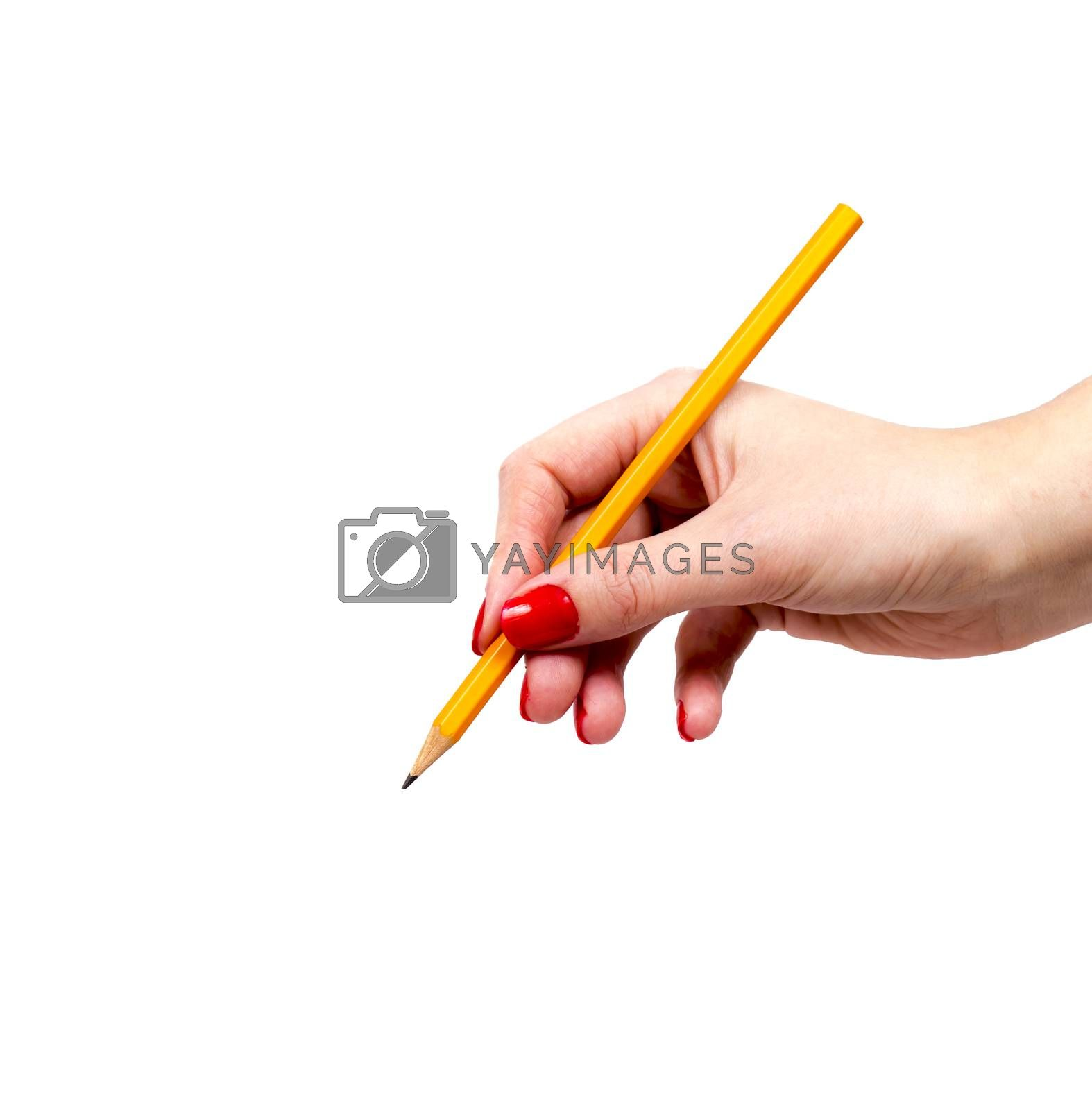 Female Hand Holding Yellow Pencil