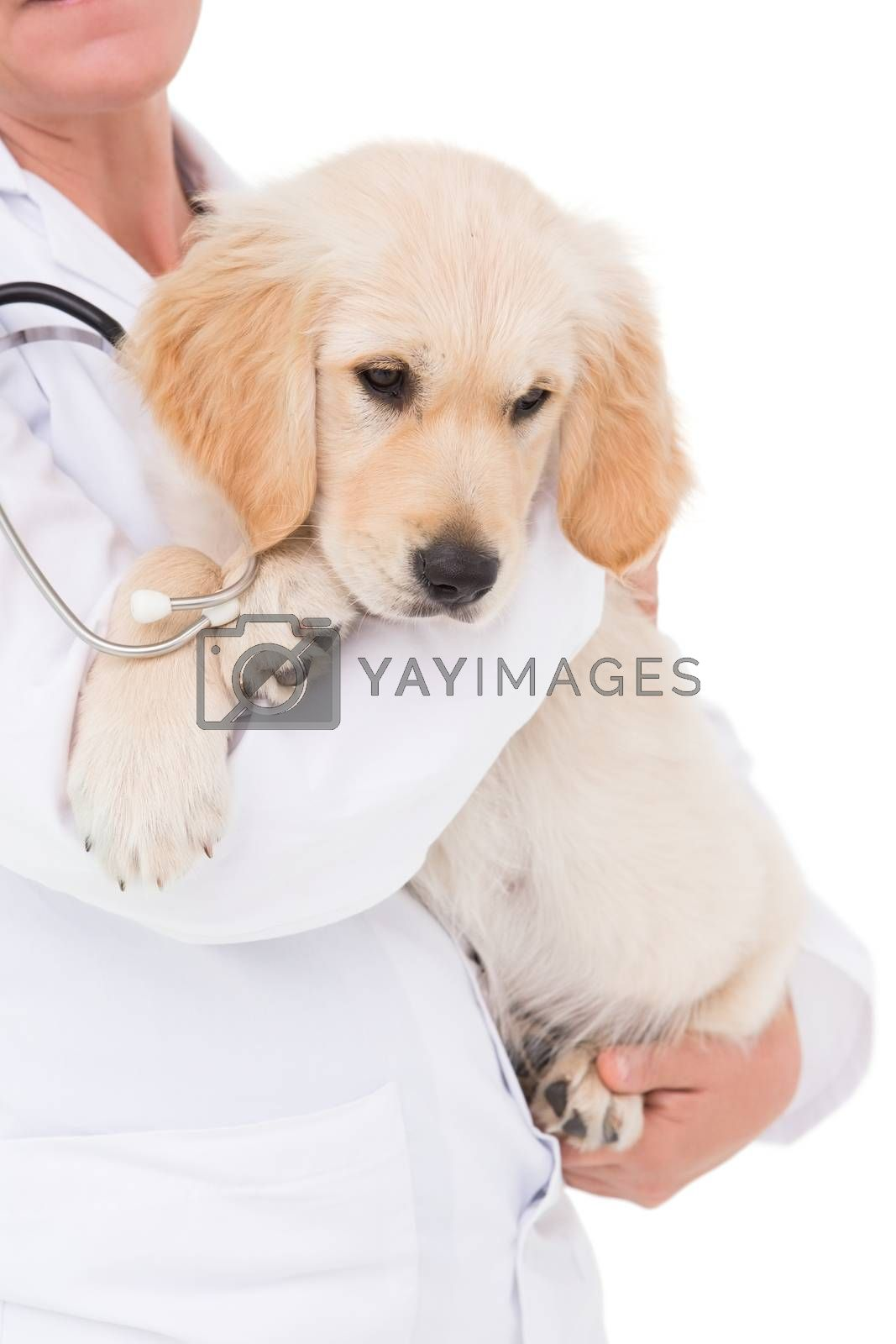Veterinarian with a cute dog in her arms on white background