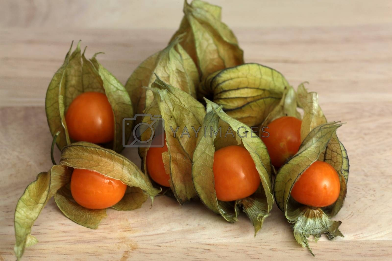 Macro photograph of Physalis peruviana.