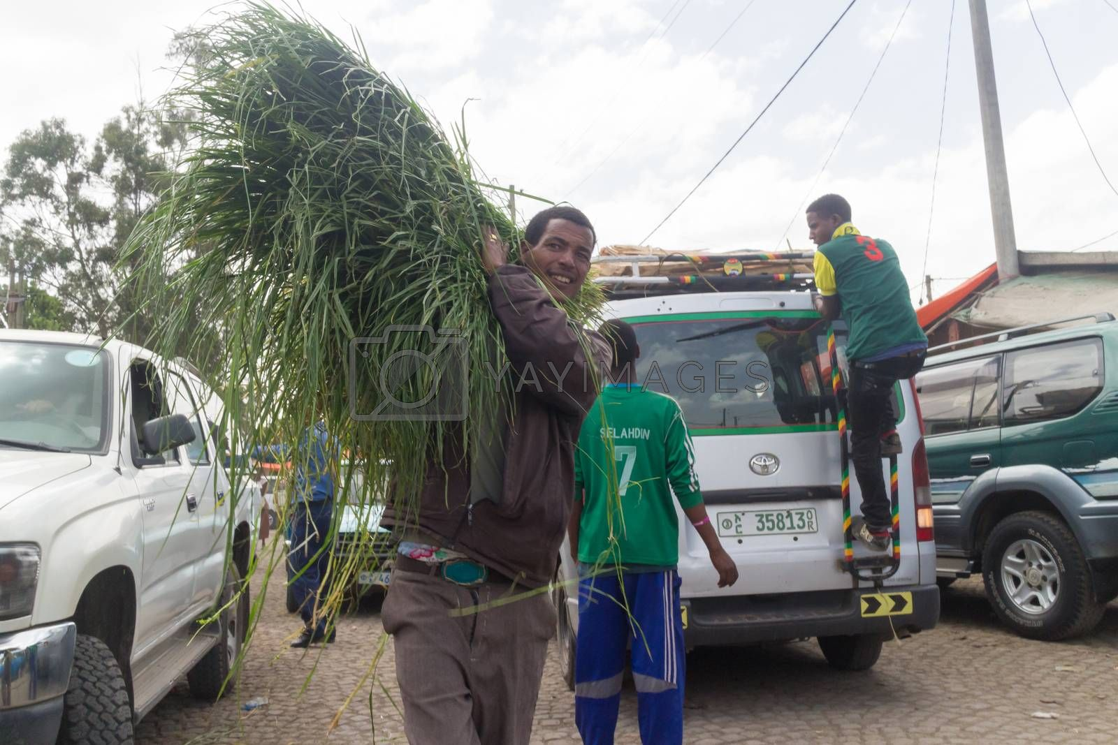 Addis Ababa: April 11: A man brings freshly cut grass, used for decorating floors during the holidays, to local market during Easter eve on April 11, 2015 in Addis Ababa, Ethiopia