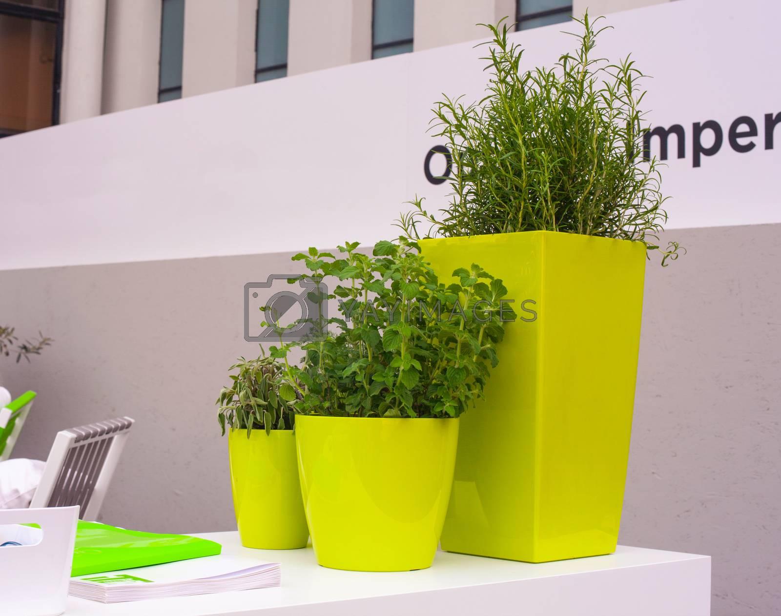 Plants inside the green pots by bepsimage