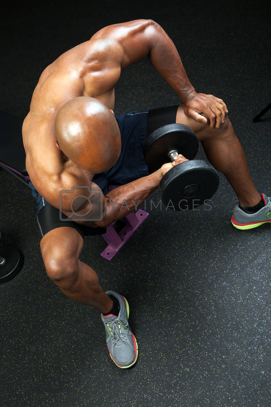 Toned and ripped lean muscle fitness man lifting weights on a curling bar.