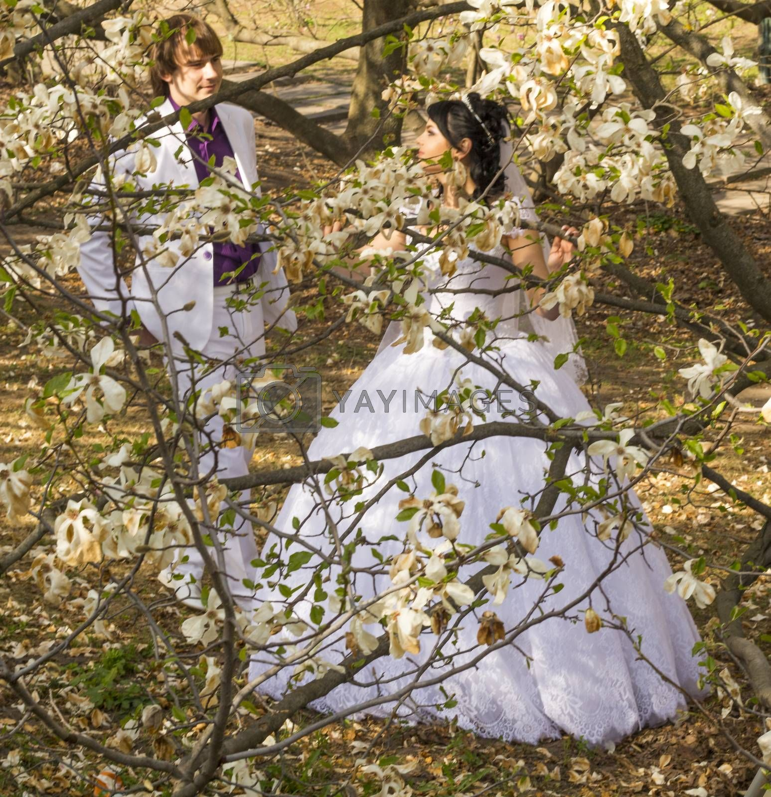 groom and bride in white dress on a background of flowering trees