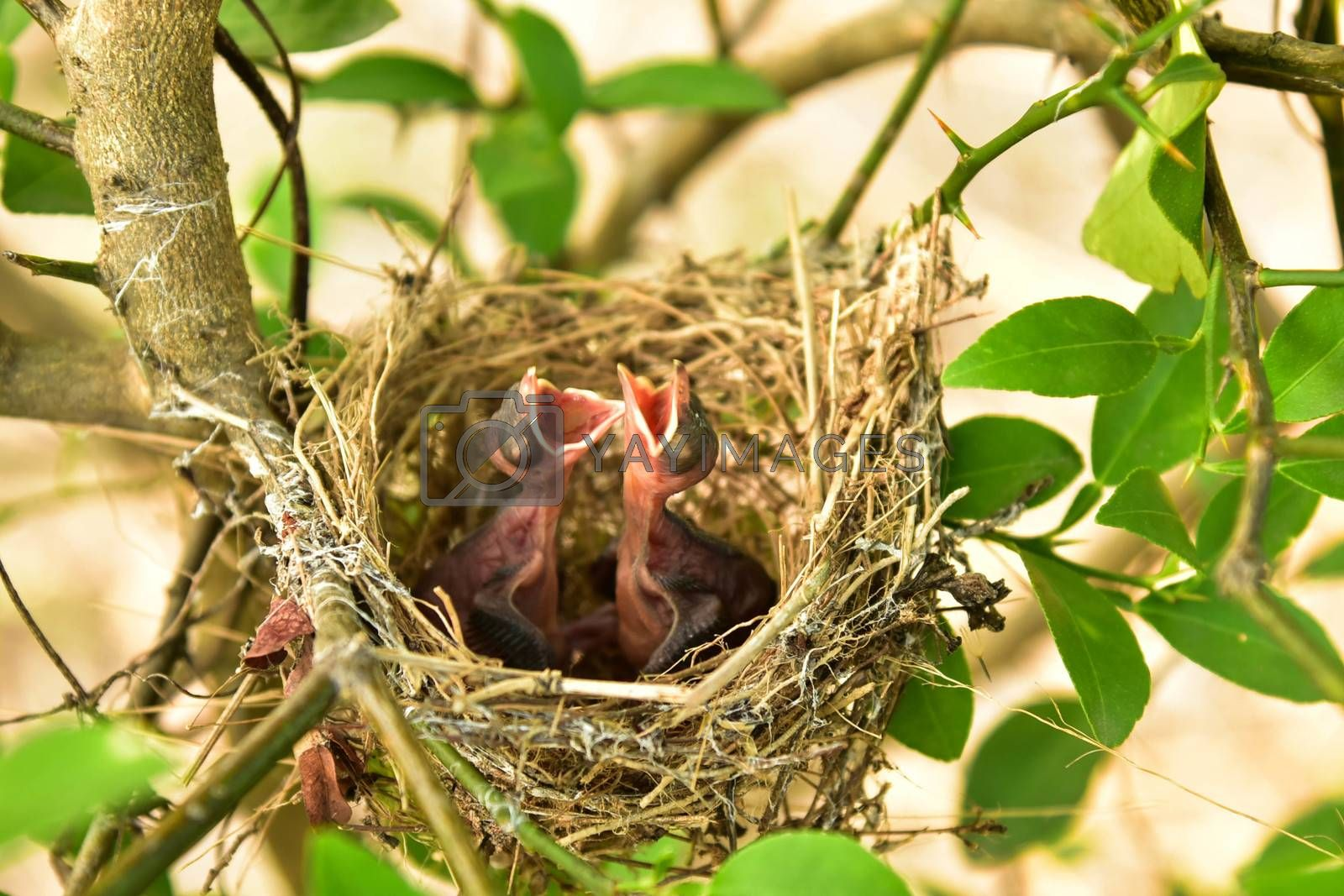 Small babies by jengit