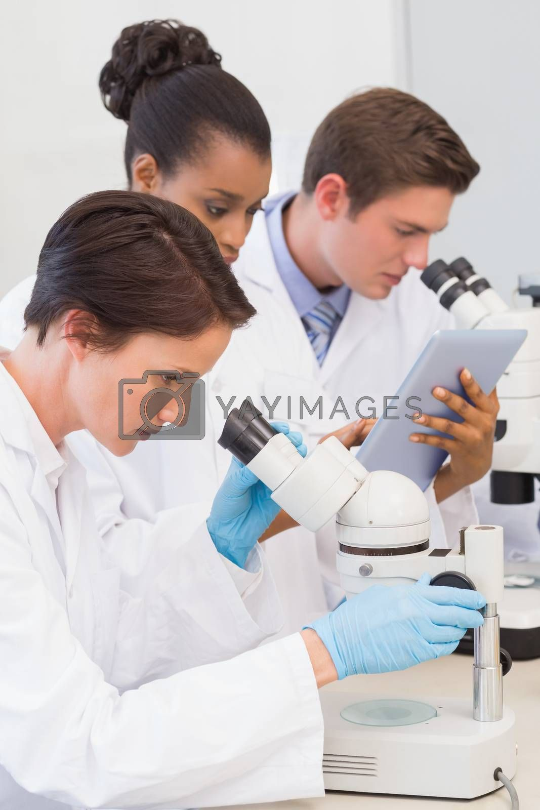 Scientists using microscope and tablet pc in the laboratory