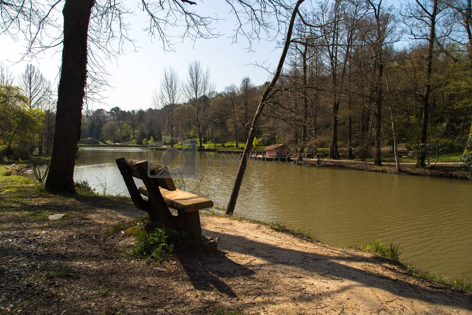 Lake in forest, river among trees, bench in riverside.