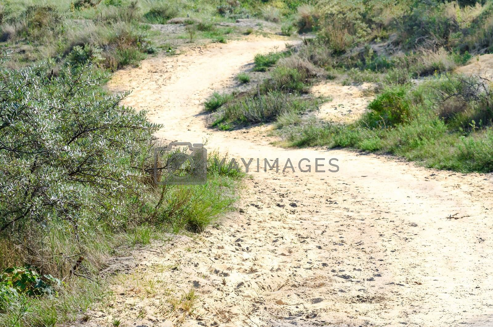 Sandy way through a landscape of dunes to the beach.