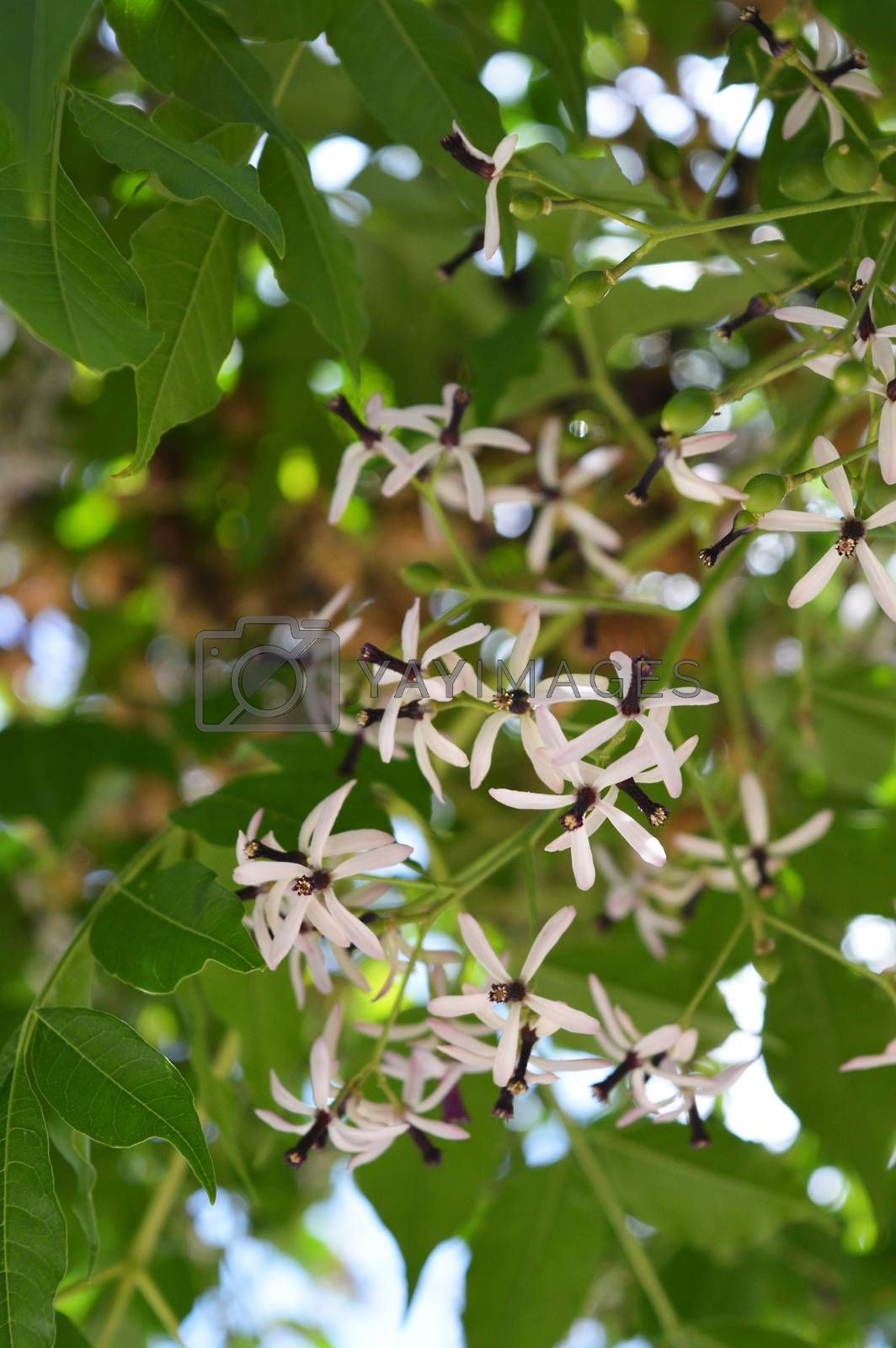 Colored photo of tree flowers  with green leaf