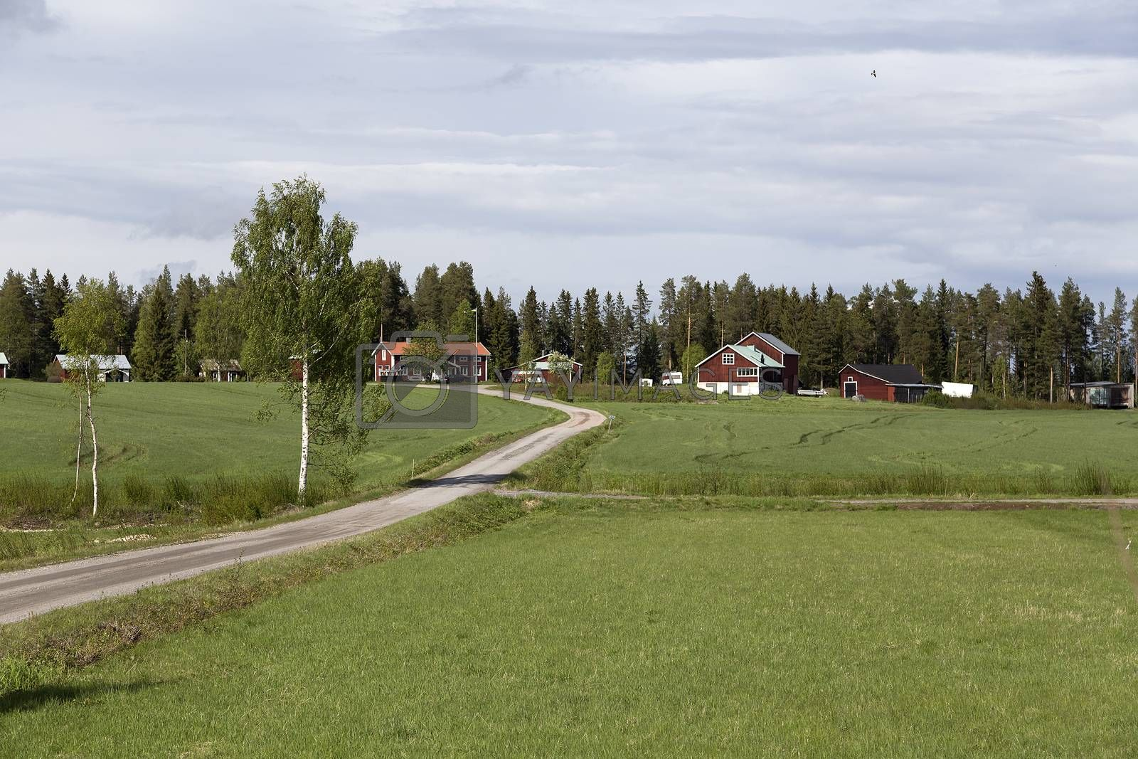 Nature in the countryside by lasseman
