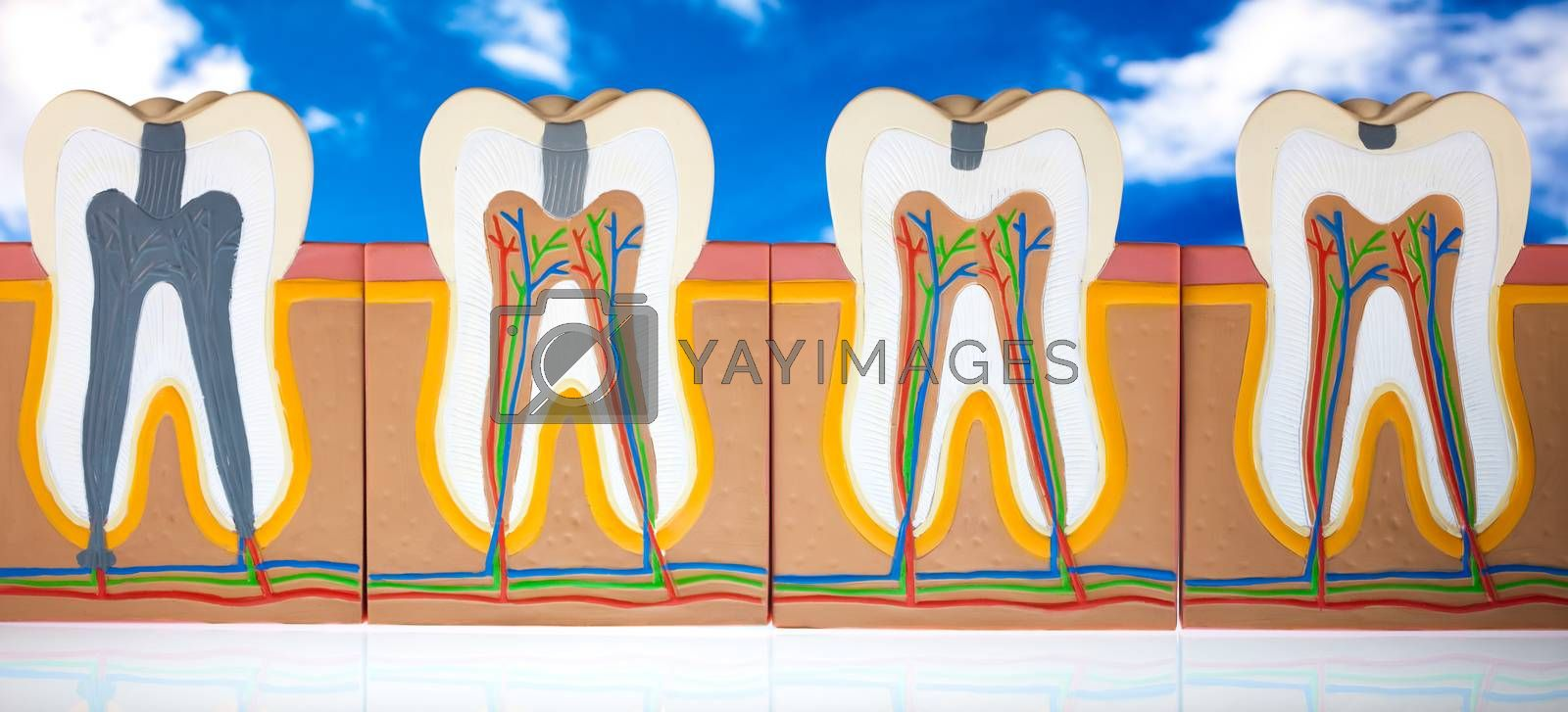 Teeth, bright colorful tone concept