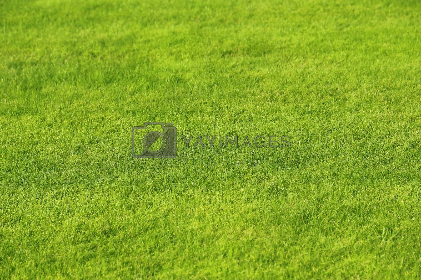 Natural green lawn background
