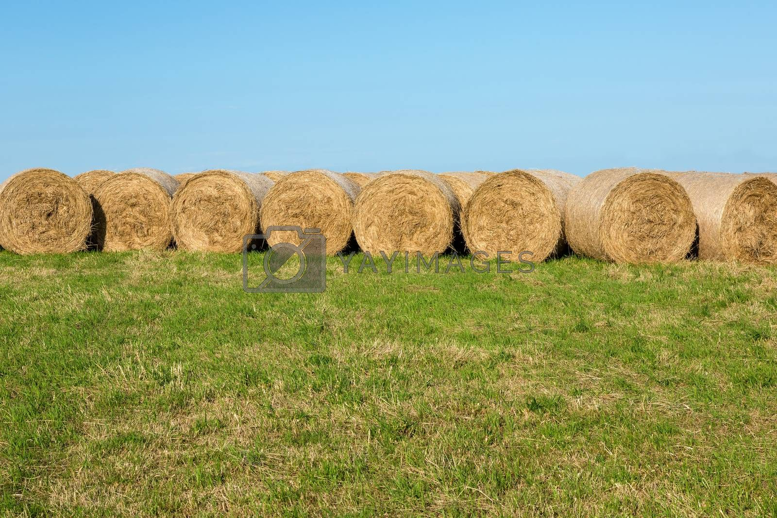 Hay Bales in Countryside Afternoon Sunshine against Horizon Landscape