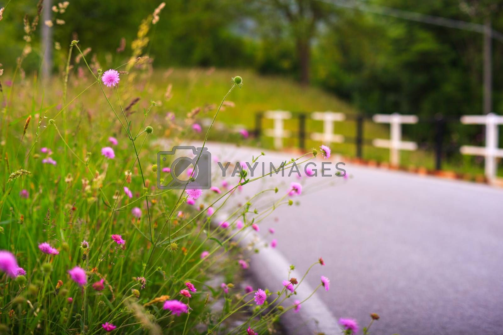 View of delicious pink countryside flowers
