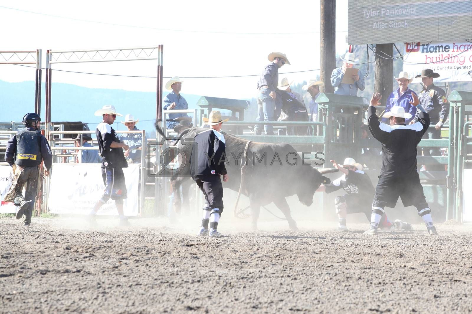 MERRITT, B.C. CANADA - May 30, 2015: Bull fighters in the first round of The 3rd Annual Ty Pozzobon Invitational PBR Event.