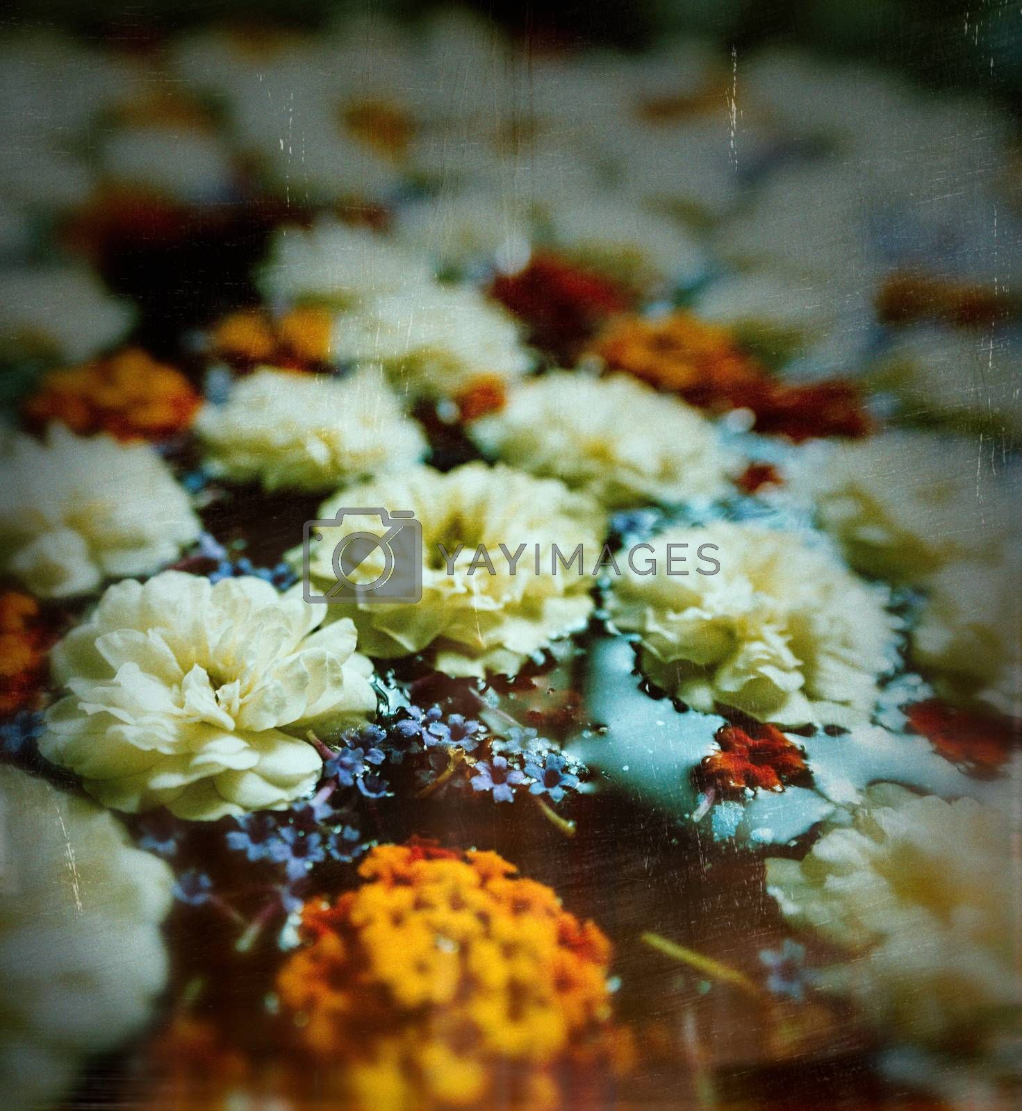 Flowers on water with vignette, film grain and scratches for a vintage look