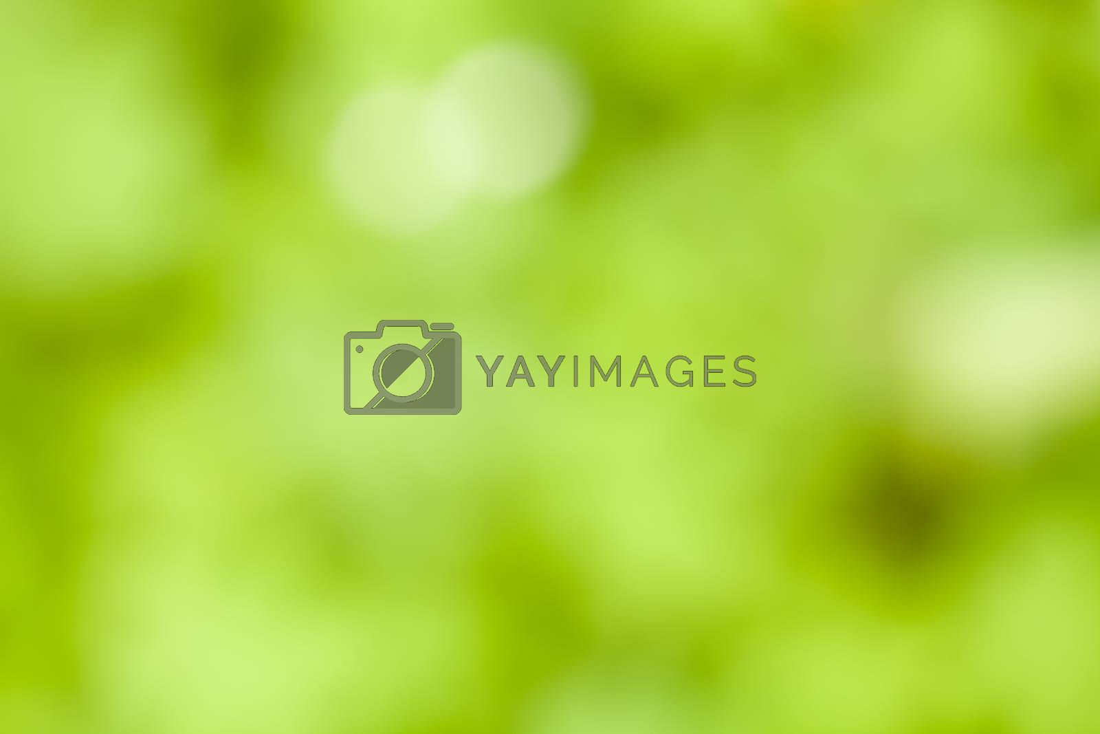 Blurry photograph of a green and yellow background