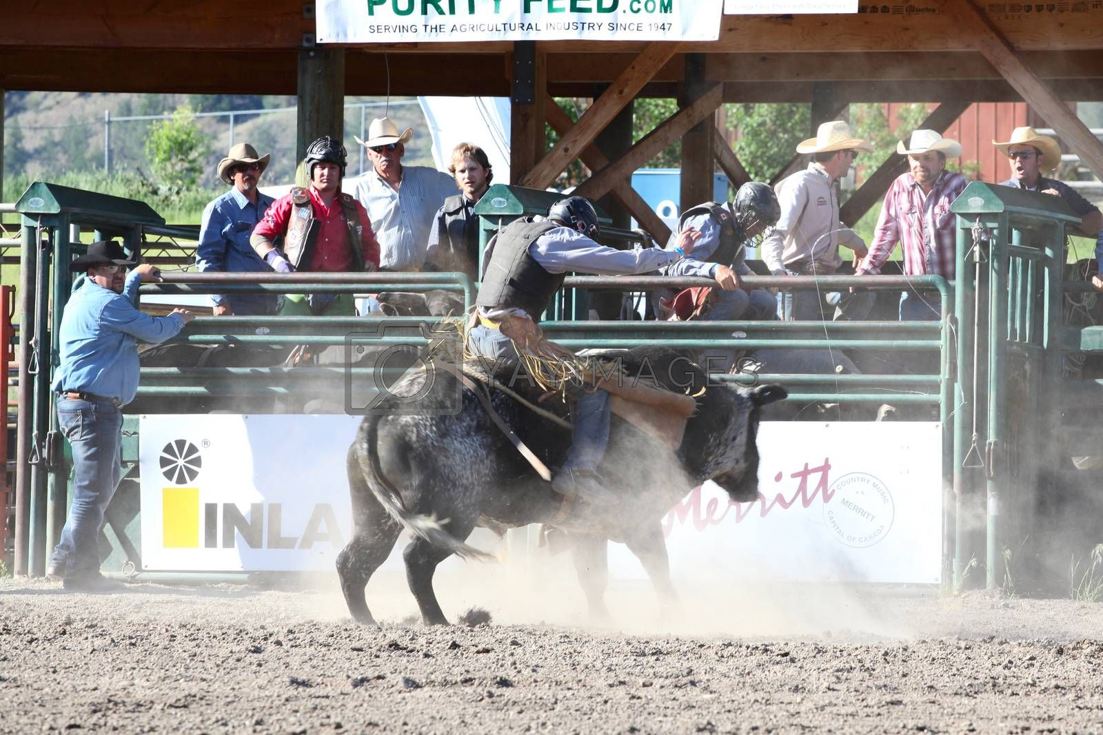 MERRITT; B.C. CANADA - May 30; 2015: Bull rider riding in the first round of The 3rd Annual Ty Pozzobon Invitational PBR Event.