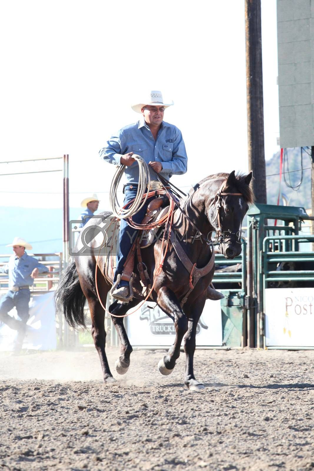 MERRITT, B.C. CANADA - May 30, 2015: Horseman rounding up bulls at The 3rd Annual Ty Pozzobon Invitational PBR Event.
