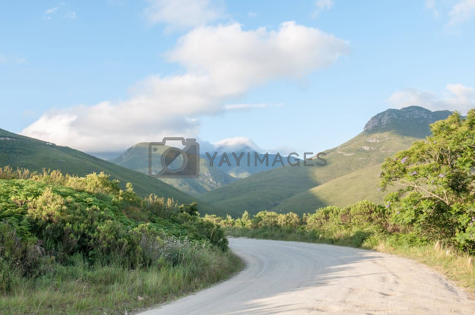 Royalty free image of Montagu Pass by dpreezg
