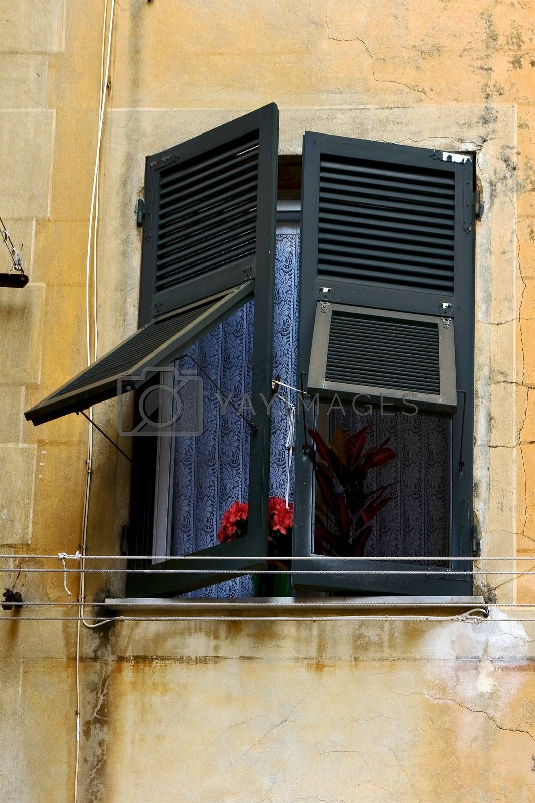 Royalty free image of green wood venetian blind l in  portofino by lkpro