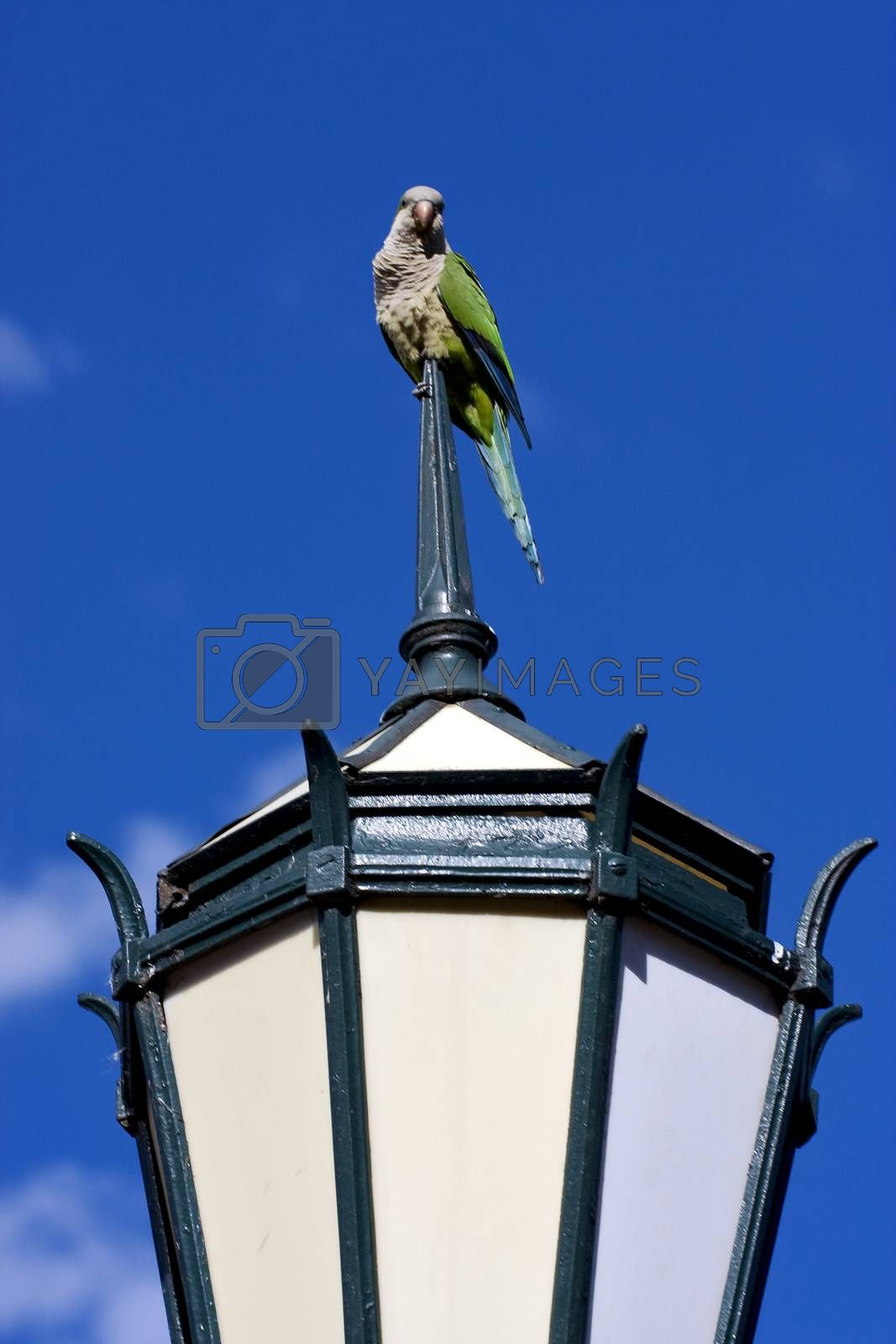 Royalty free image of  street lamp  and parrot by lkpro