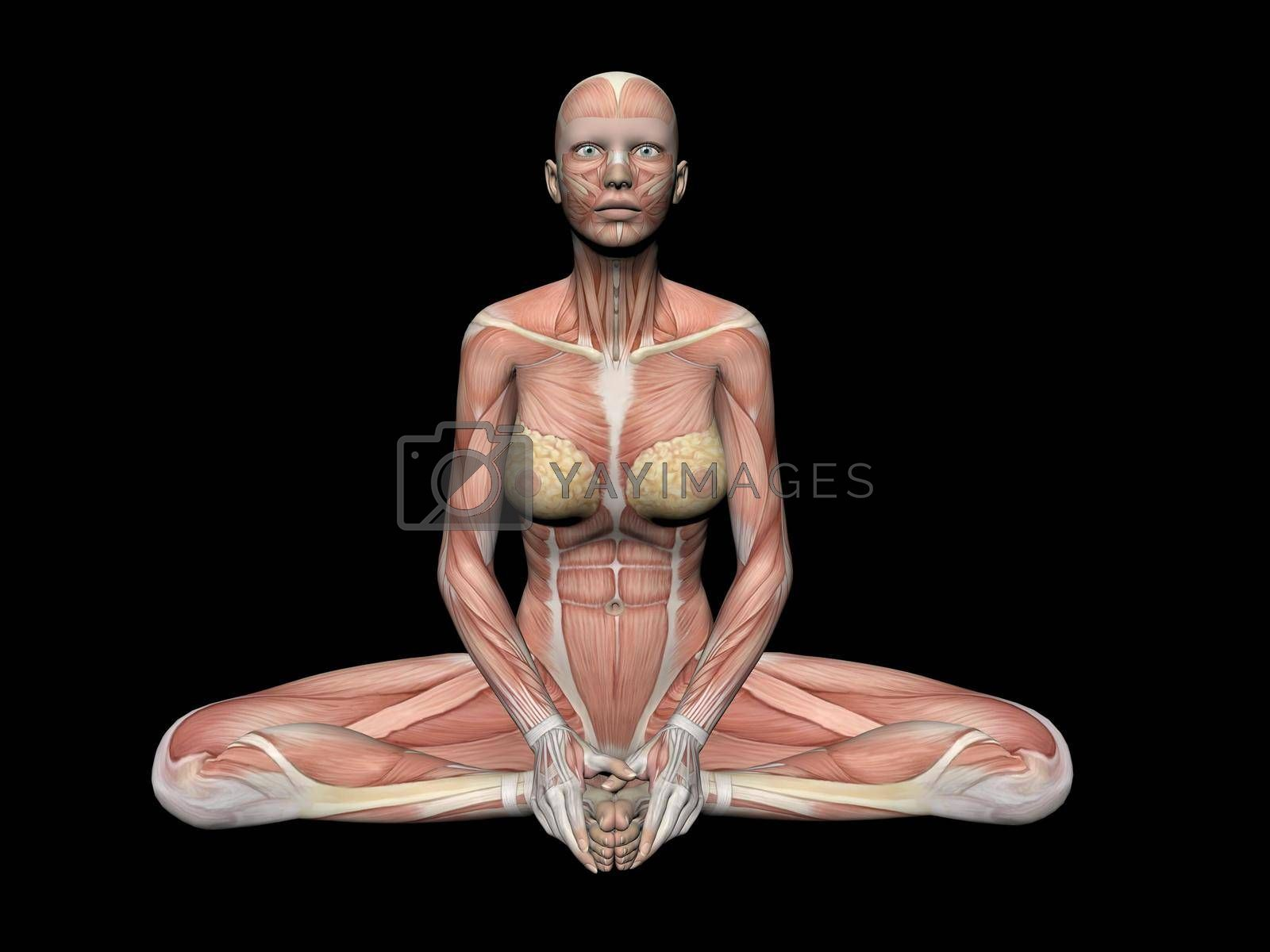 Royalty free image of woman anatomy figure - 3d render by mariephotos