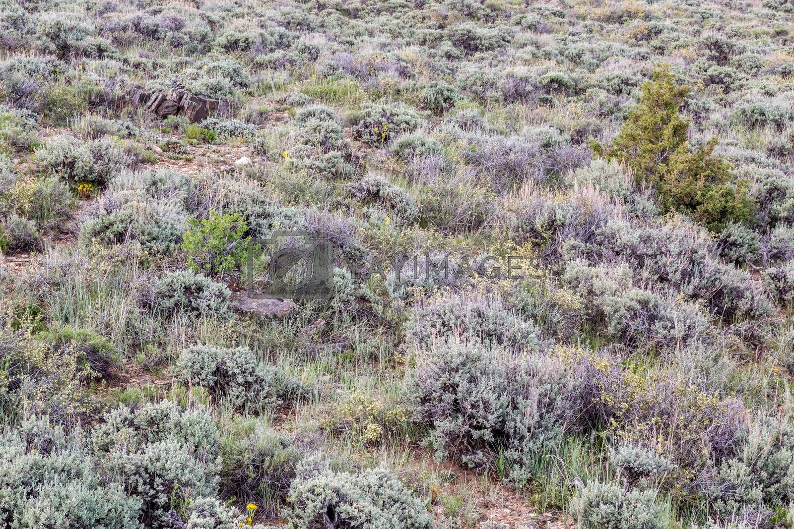 Royalty free image of sagebrush, wildflowers and other shrubs by PixelsAway