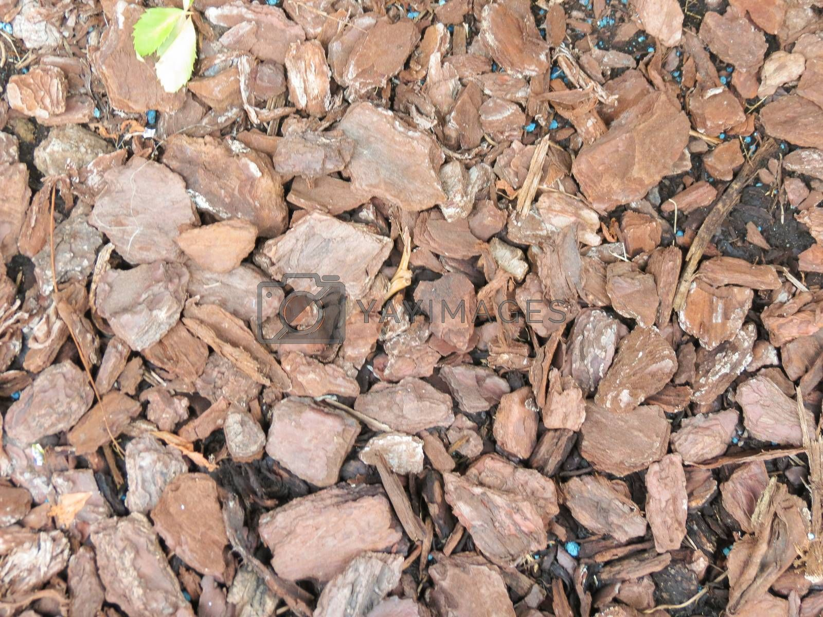 Royalty free image of bark mulch by paolo77