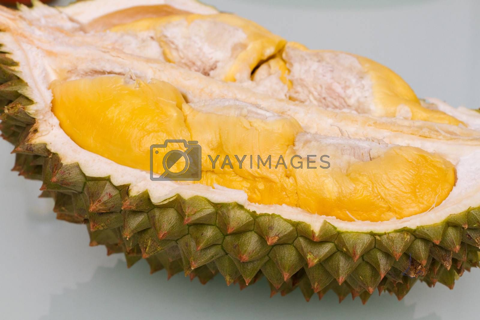 Royalty free image of Durian by kiankhoon