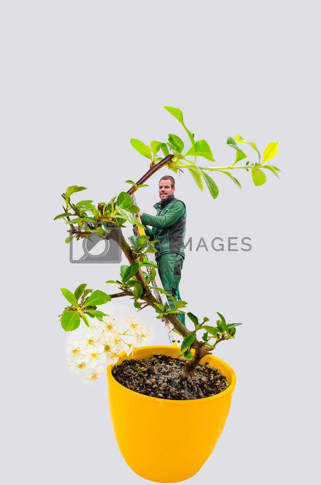 Royalty free image of Man bonsai tree by JFsPic