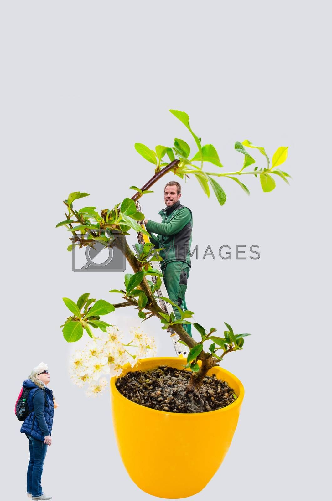 Royalty free image of Abstract, woman and man with bonsai tree by JFsPic