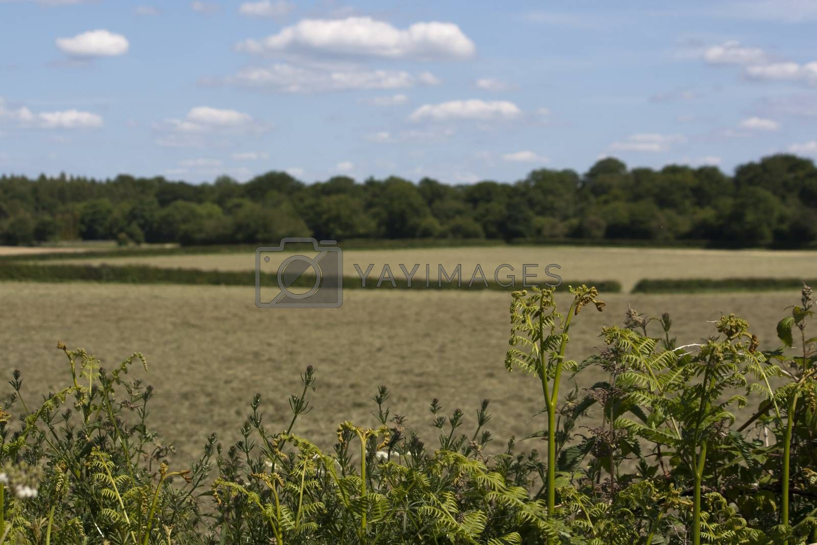 Royalty free image of English Countryside, Holmer Green, Buckinghamshire by christopherhall