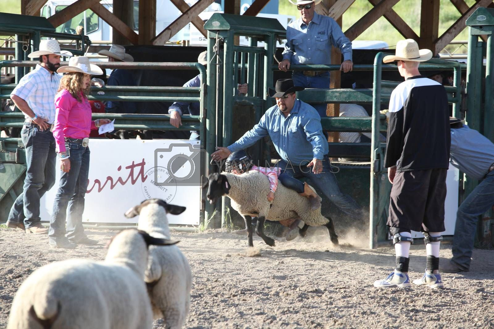 MERRITT, B.C. CANADA - May 30, 2015: Mutton Busting at the The 3rd Annual Ty Pozzobon Invitational PBR Event.