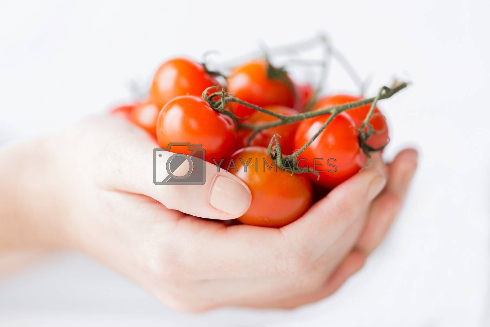 healthy eating, dieting, vegetarian food and people concept - close up of woman hands holding cherry tomatoes bunch at home