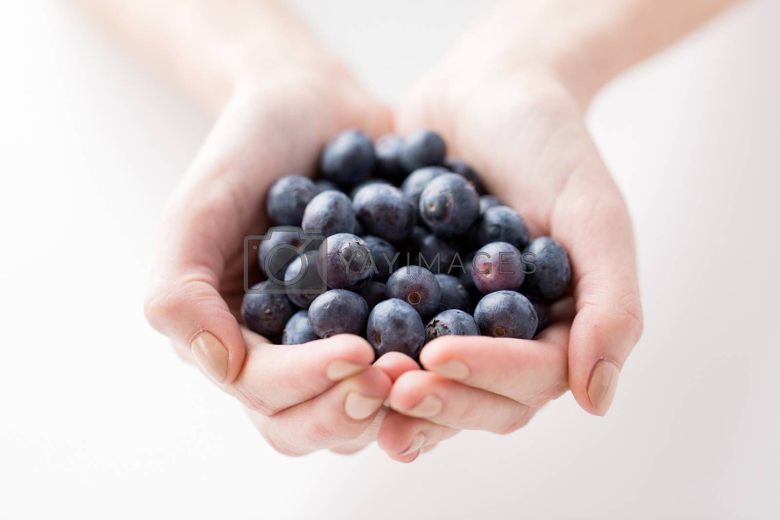 Royalty free image of close up of woman hands holding blueberries by dolgachov