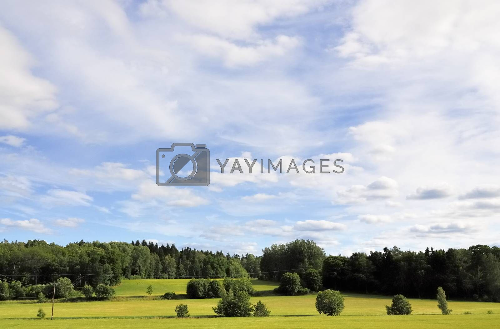 Trees on the horizon, on a bright summers day. Ekerö, Sweden.