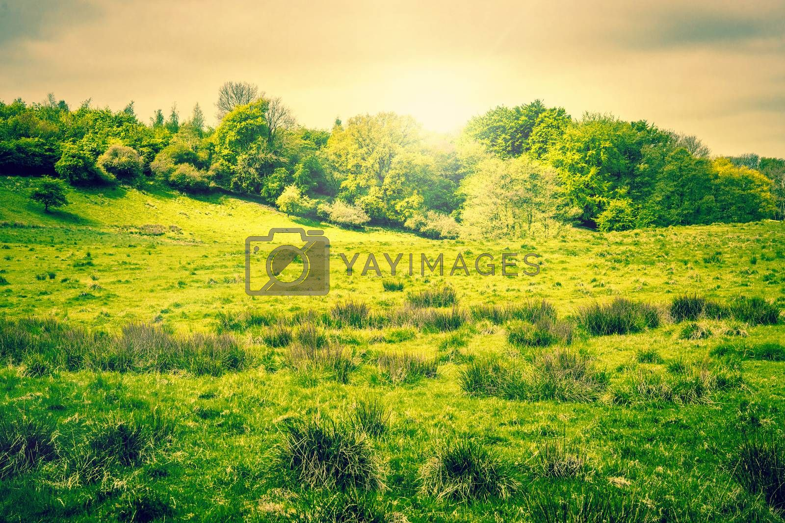 Sunshine over a countryside landscape with trees